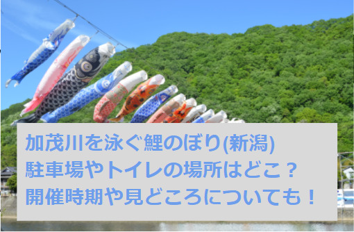 加茂川を泳ぐ鯉のぼり②